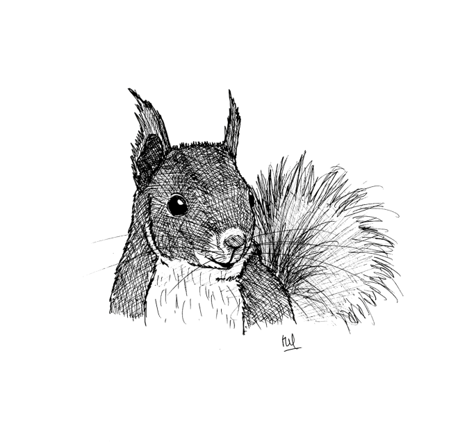 ecureuil-roux_MB